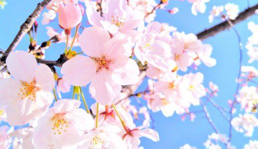 鴨居の魅力! ~ 桜 見どころスポット ~